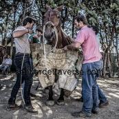 Ceret 2017 cavalerie